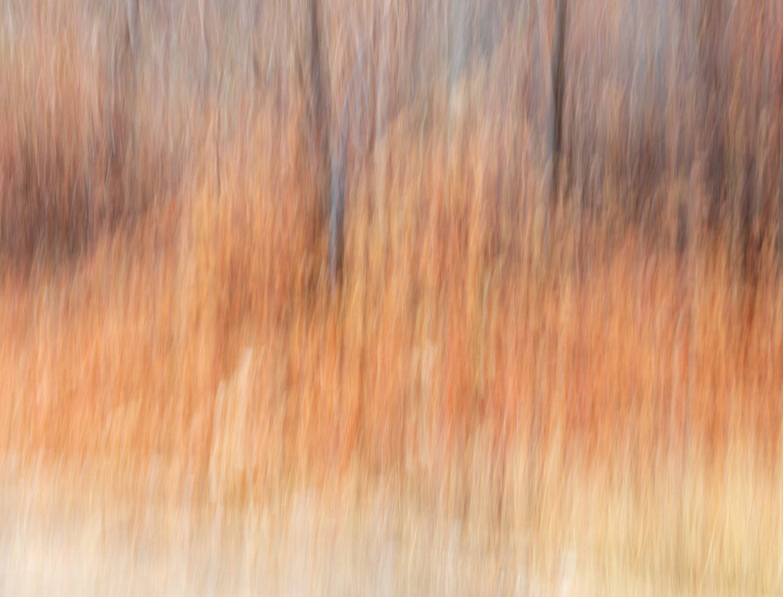 Soft Forest