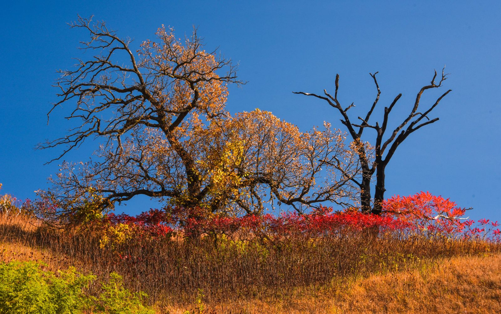 Autumn on Top of the Hill