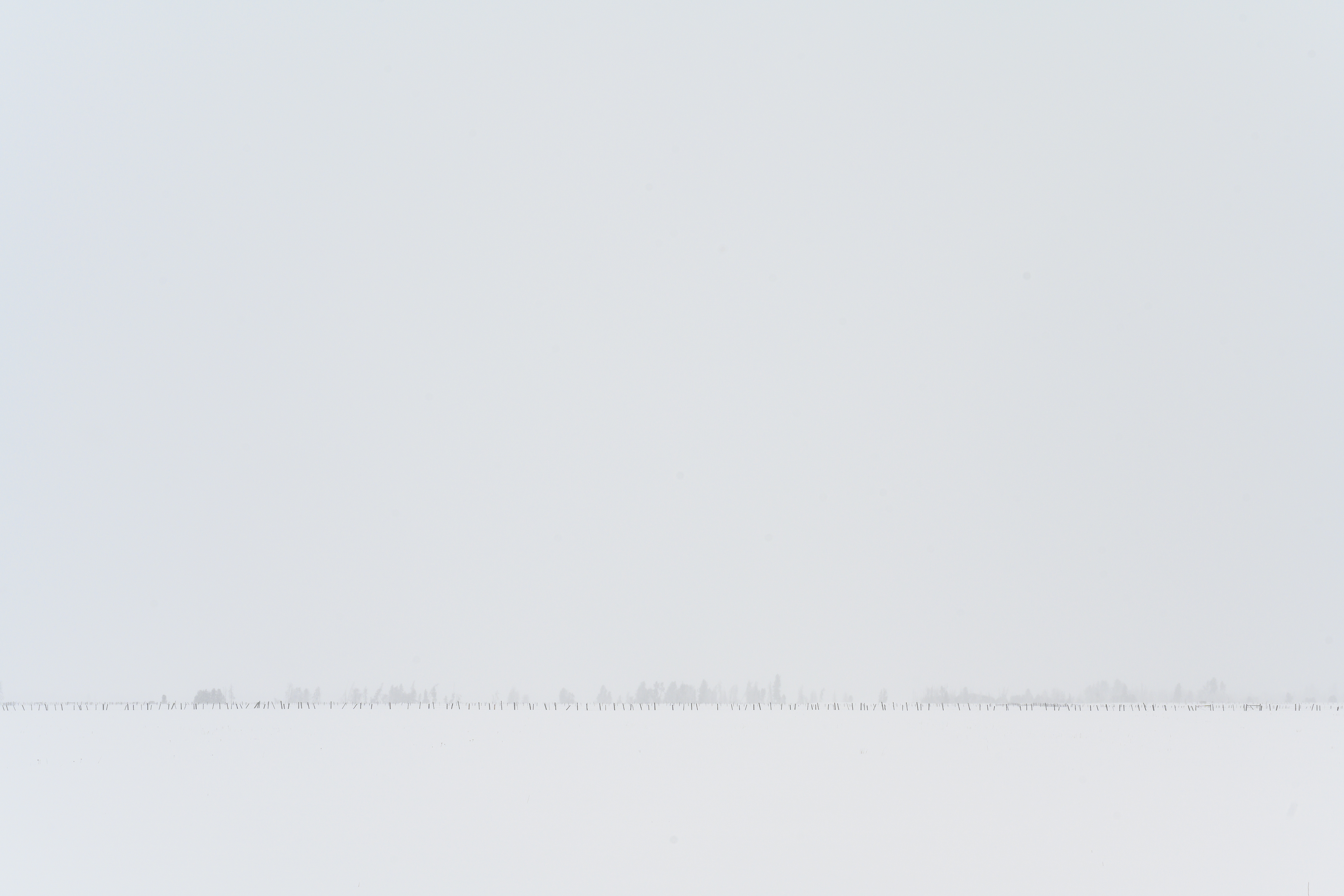 A Countryside Whiteout