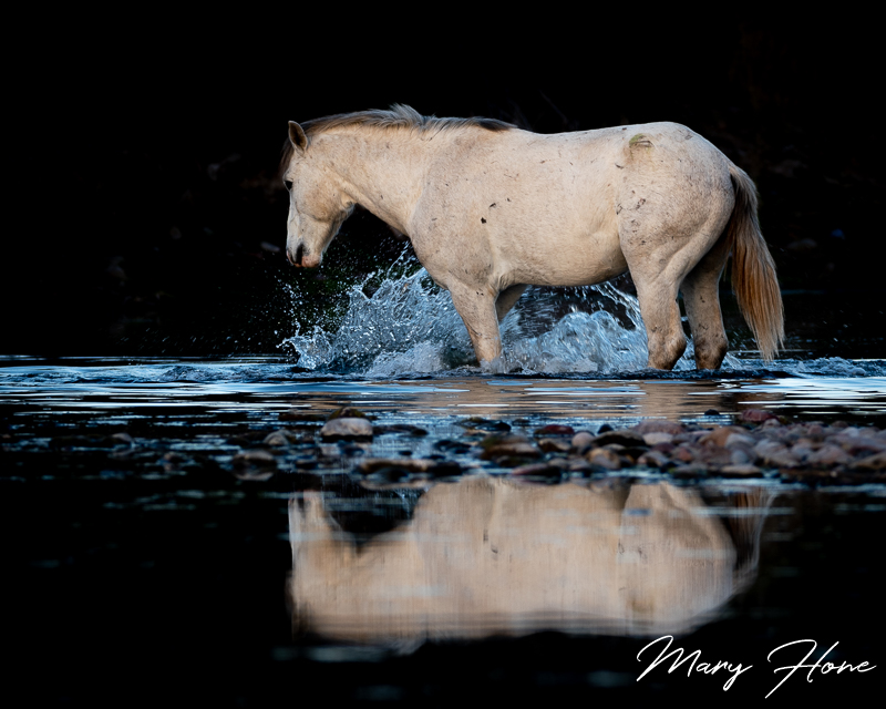 Wild Horse in the River