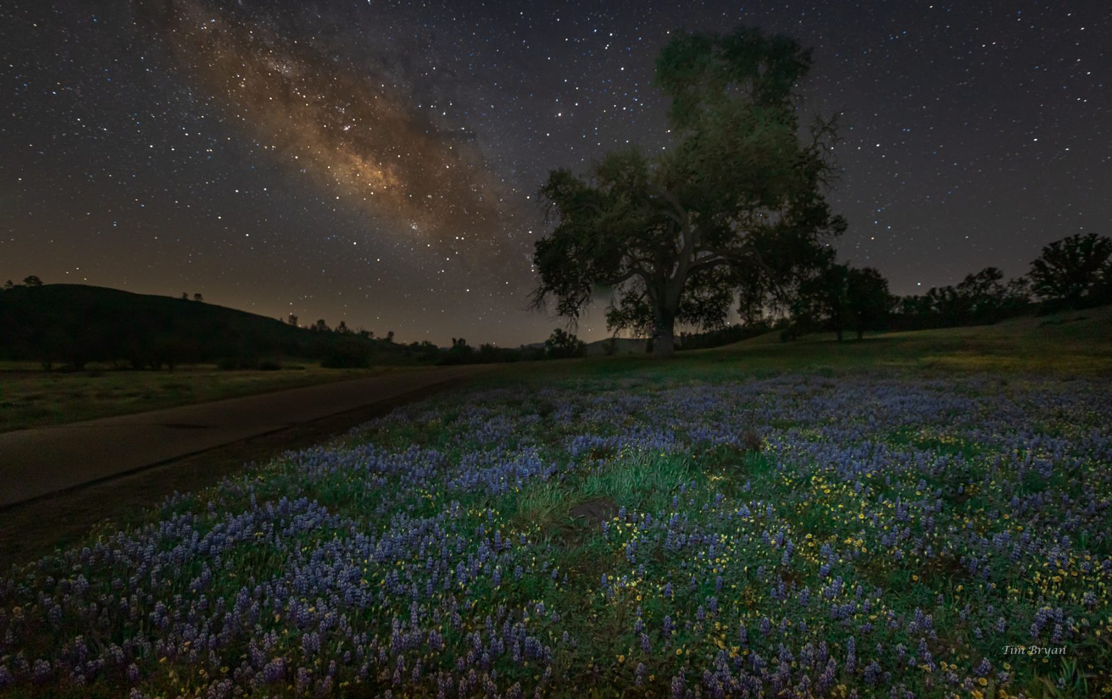 Milky Way and Wildflowers