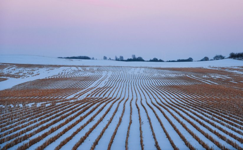 Snow Covered Fields