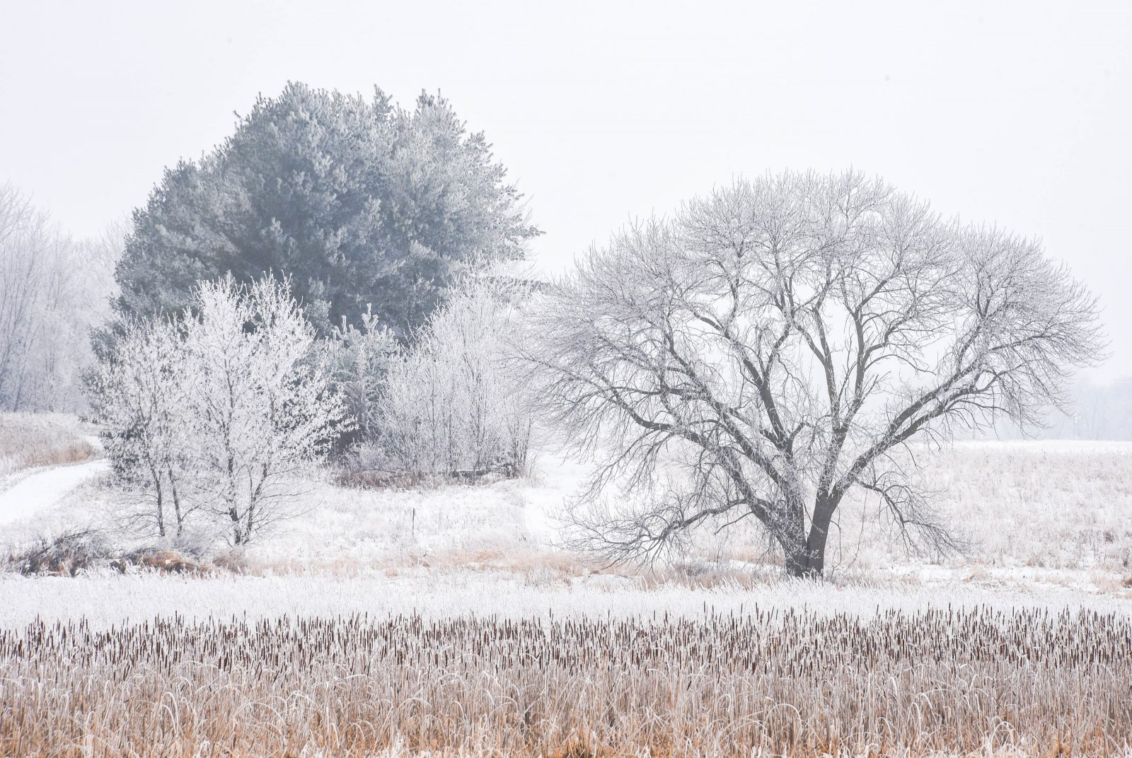 Covered in Hoar Frost
