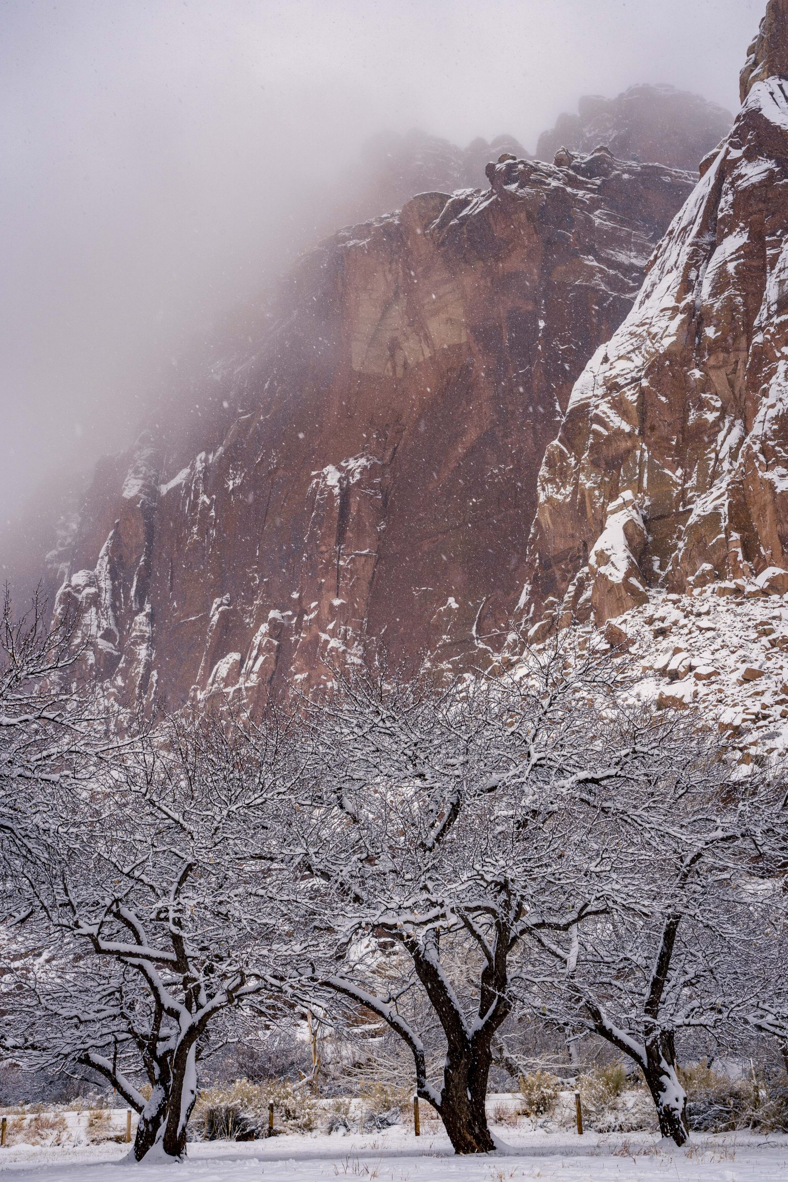 Capitol Reef Snow in the Orchard