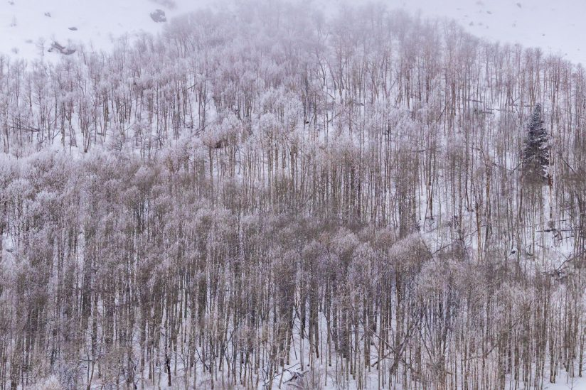 Frozen Trees & Cold Fingers