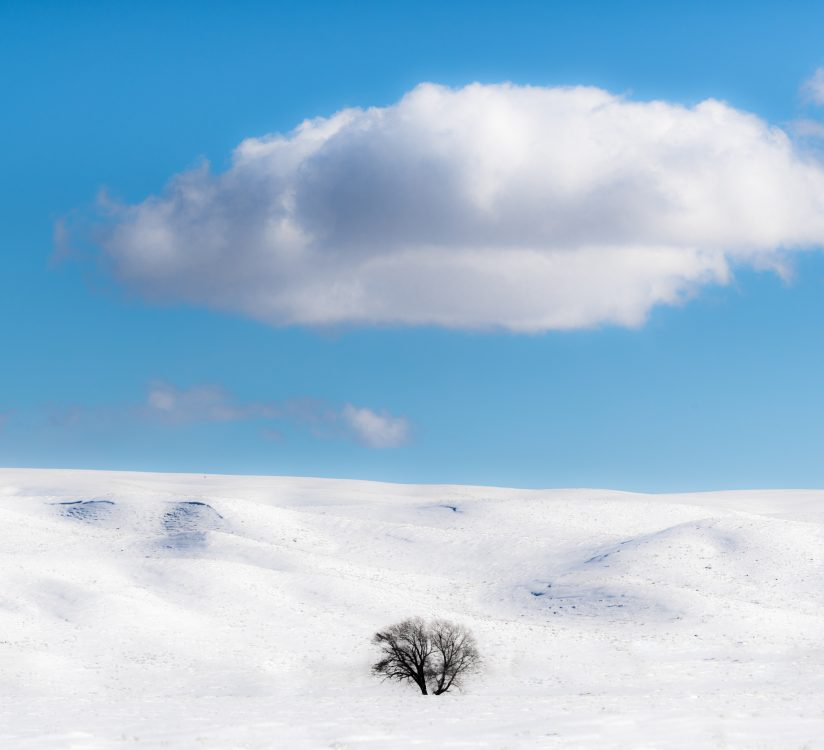 Lone Tree in Snowy Valley