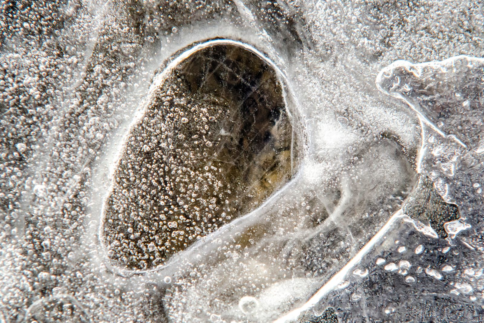 Fossils Frozen In Time