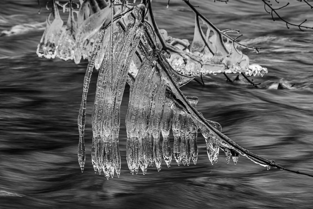 Icicles on the River