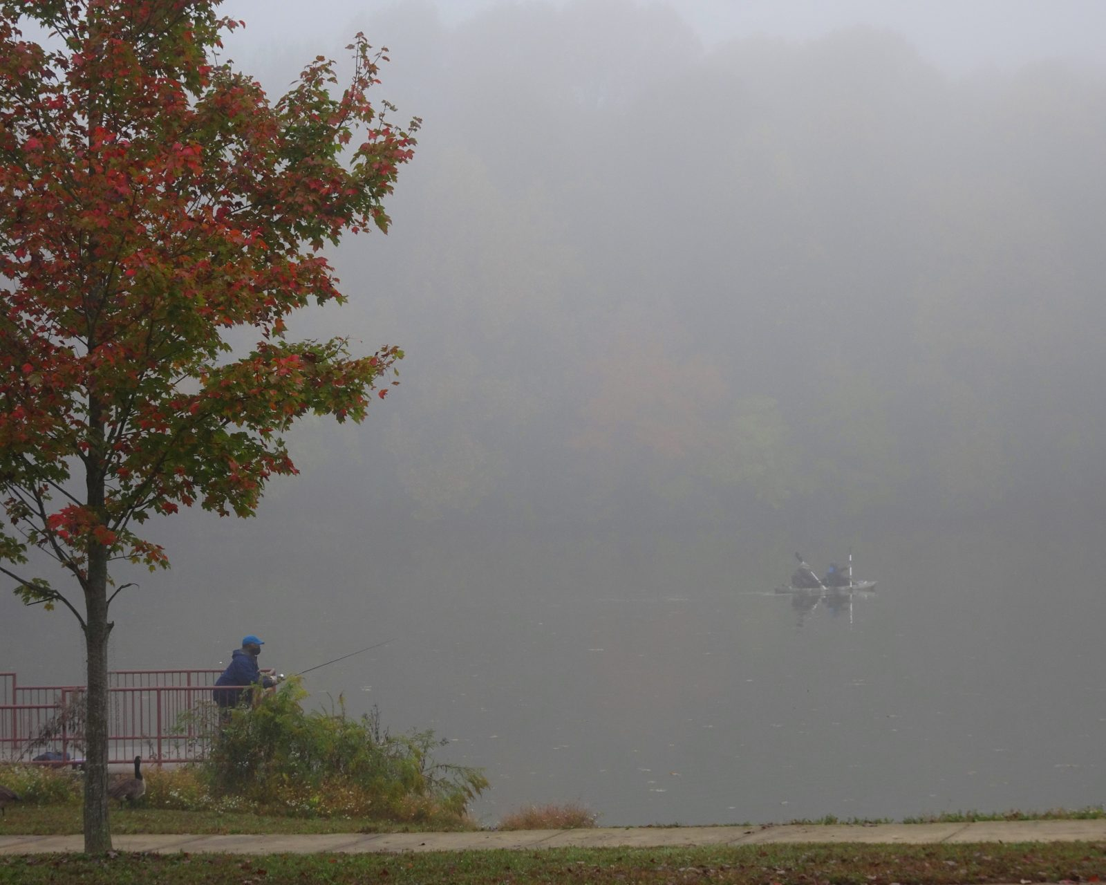 Foggy Fishing
