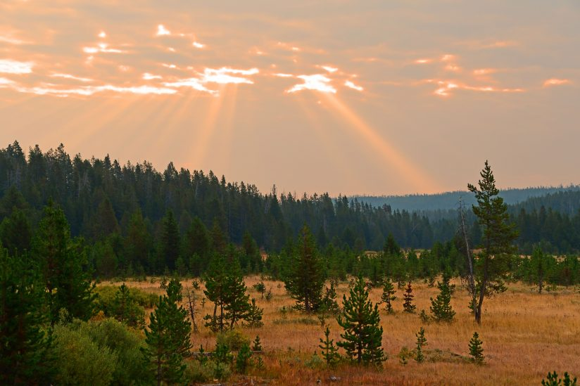Yellowstone Morning