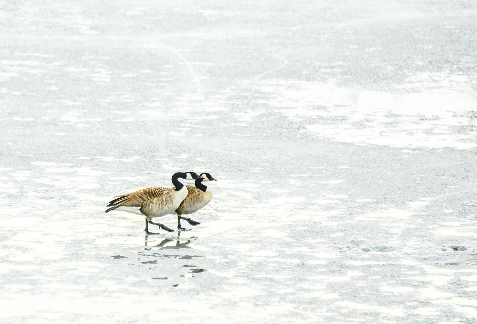 Step Together over the Frozen Lake