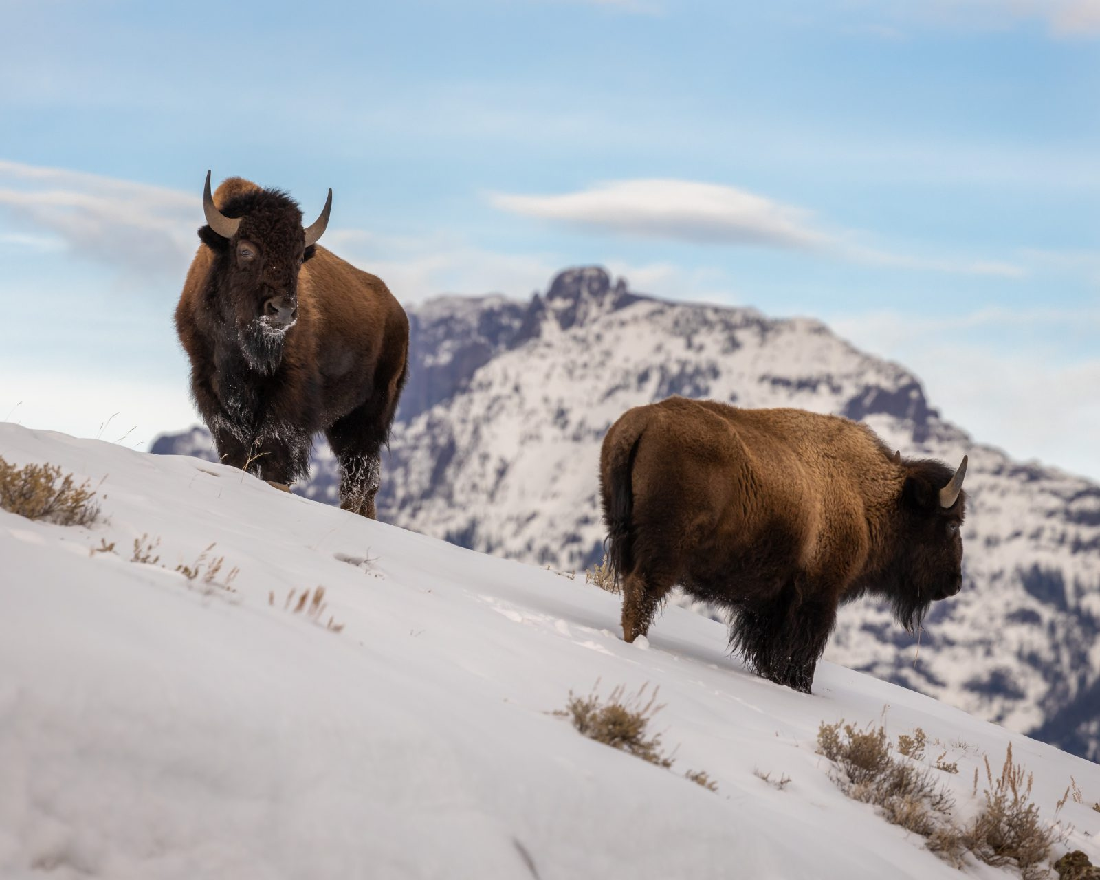 Bison View
