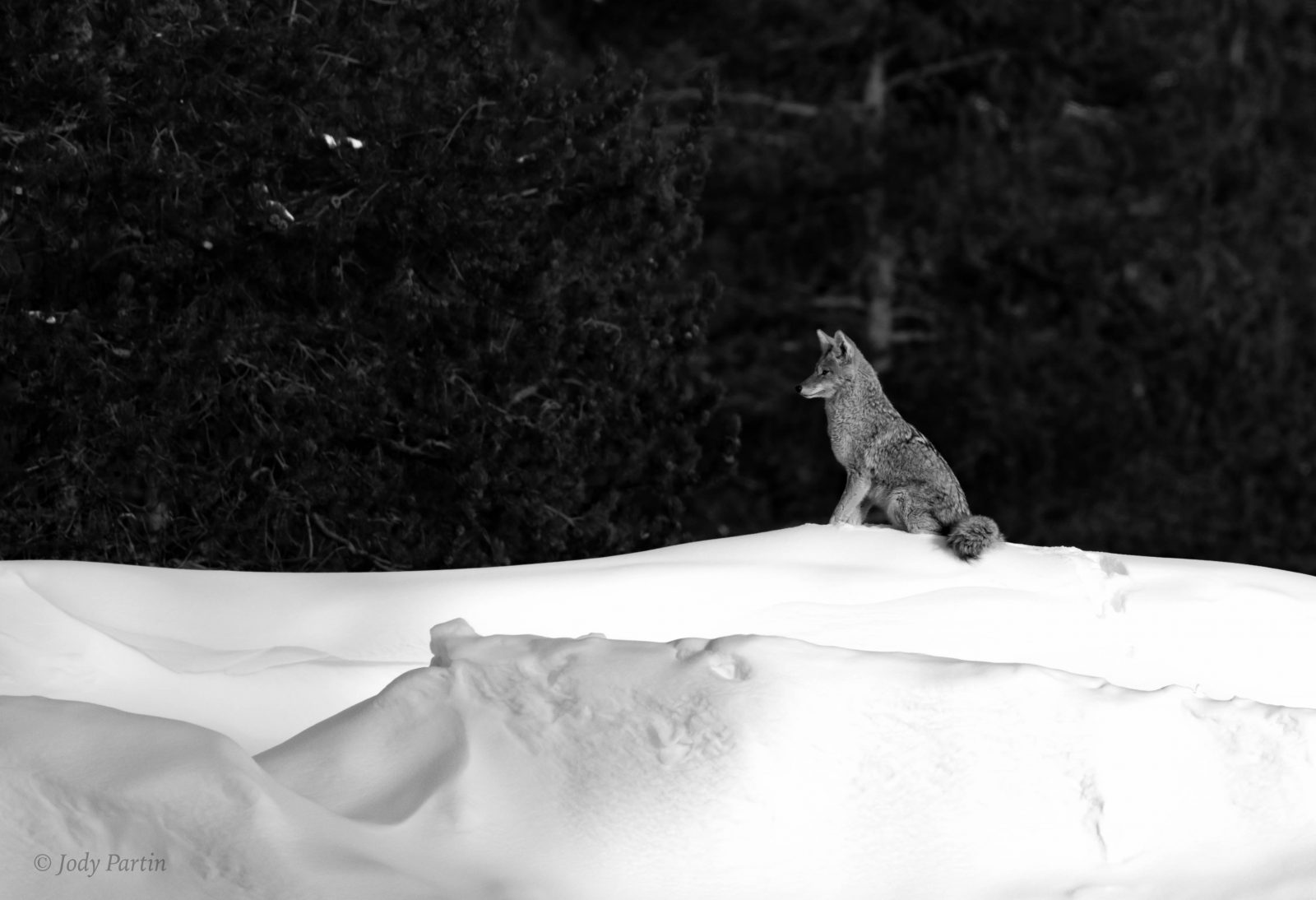 King of the Snowbank