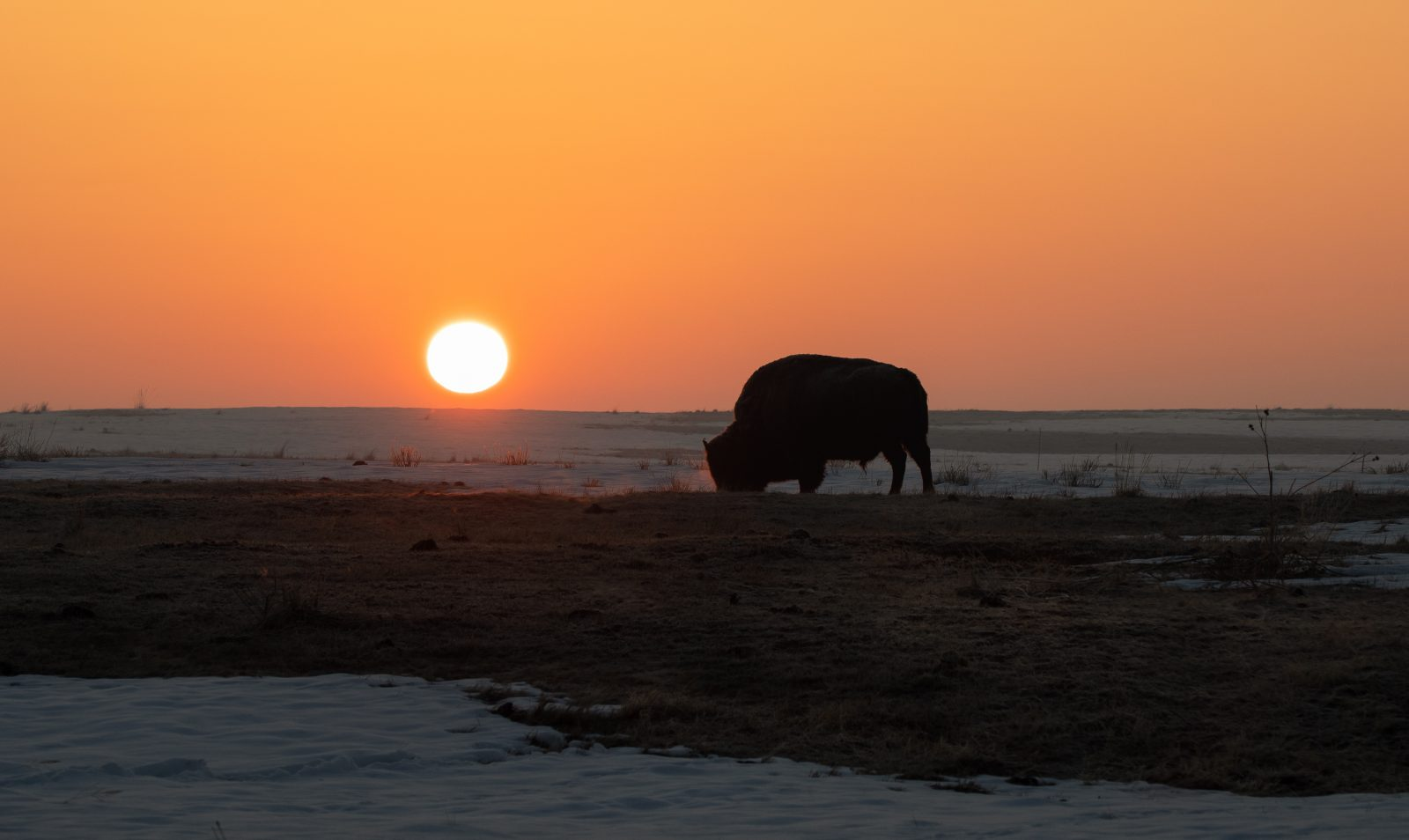 Buffalo & Sunrise