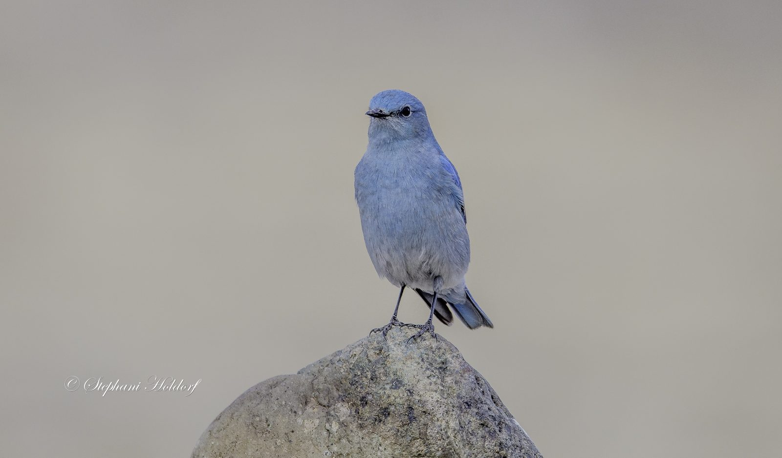 Perched on a rock