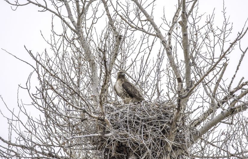 Watching from the Nest