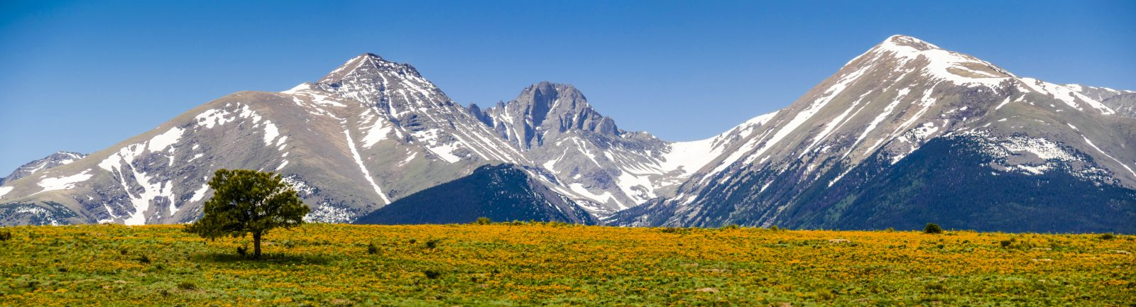 Lone Tree and Mountain Meadow