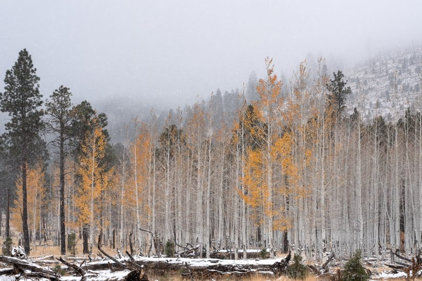 The Struggle Between Fall And Winter II