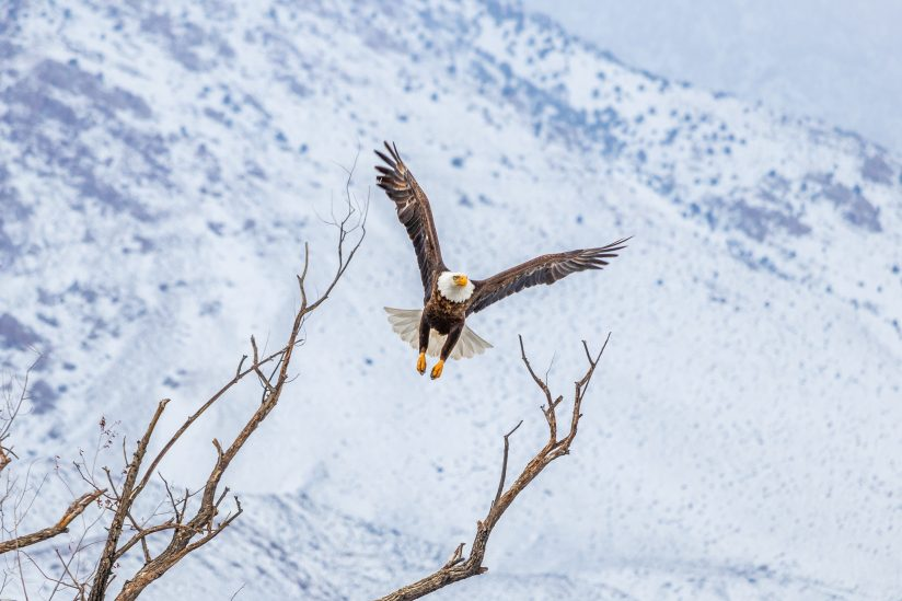 Reaching For The Eagle