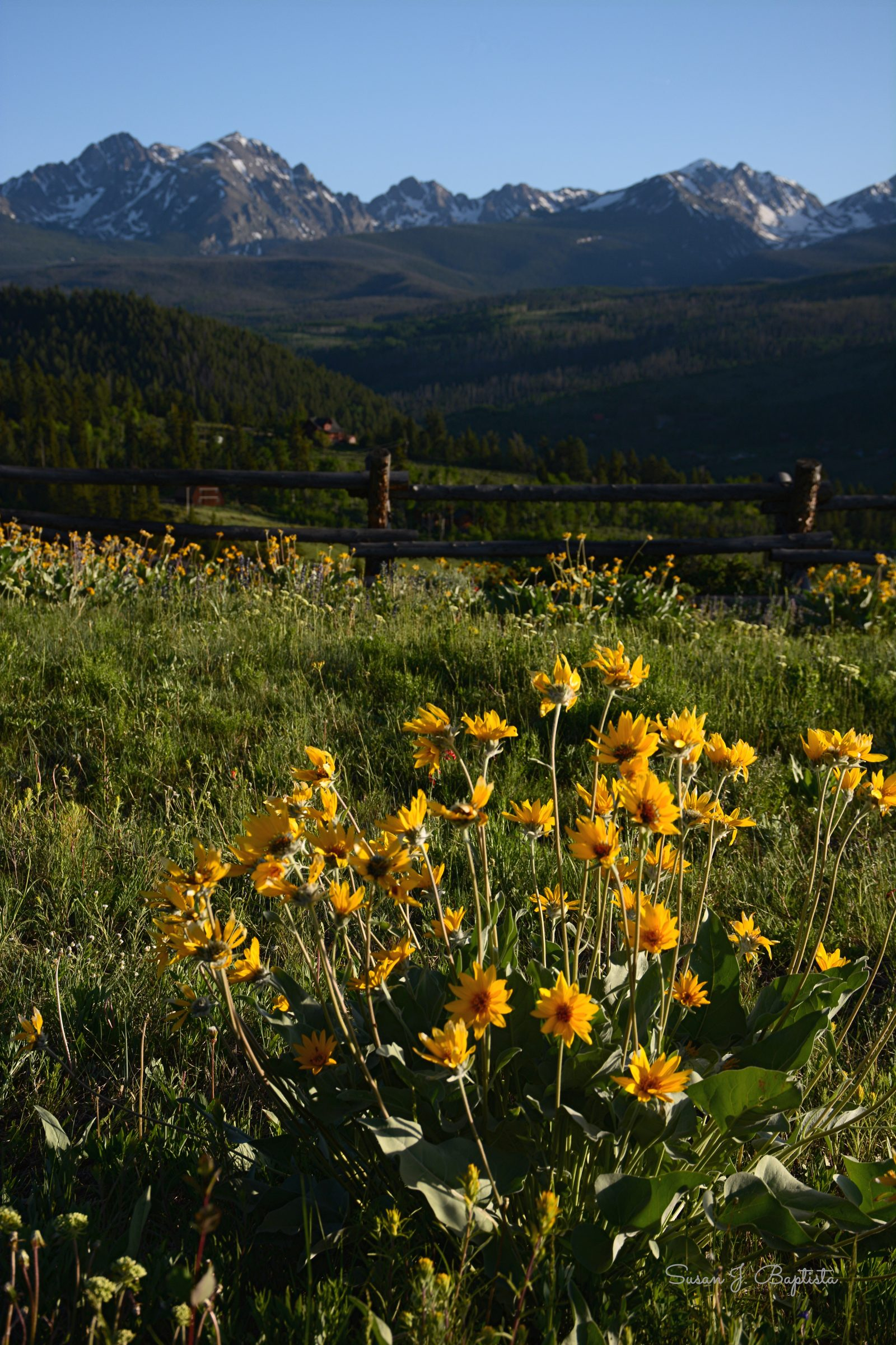 Gore Mountain Range In Bloom