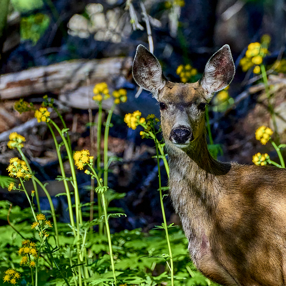 Among Spring Wildflowers