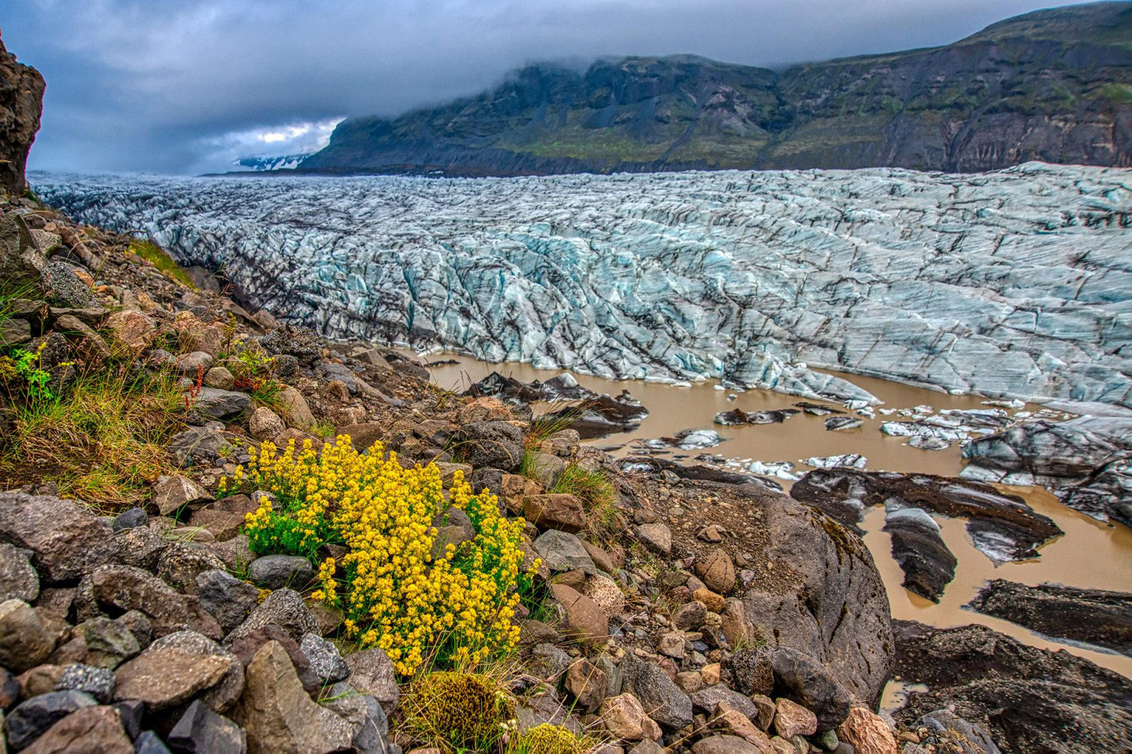 Glacier and yellow flowers