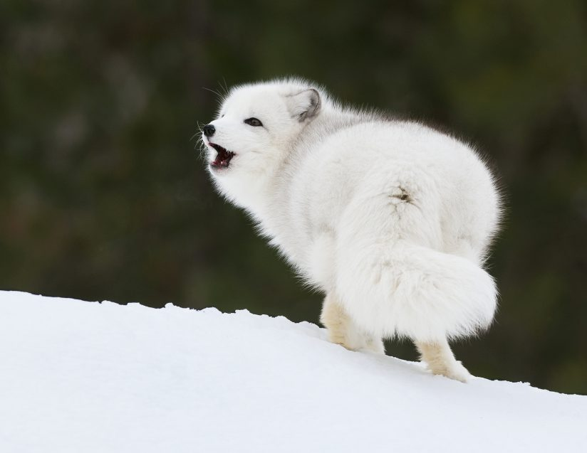 Barking Into The Wind.