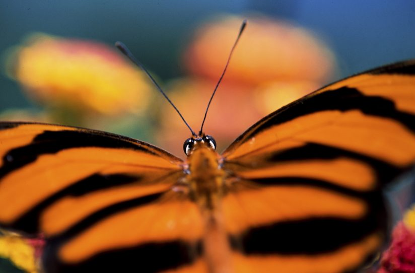 A Butterfly's Perspective