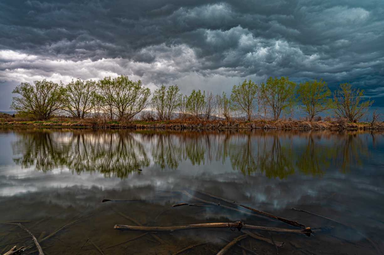Trees of a Storm