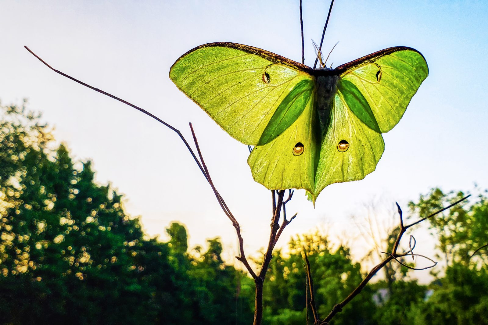 Very big butterfly