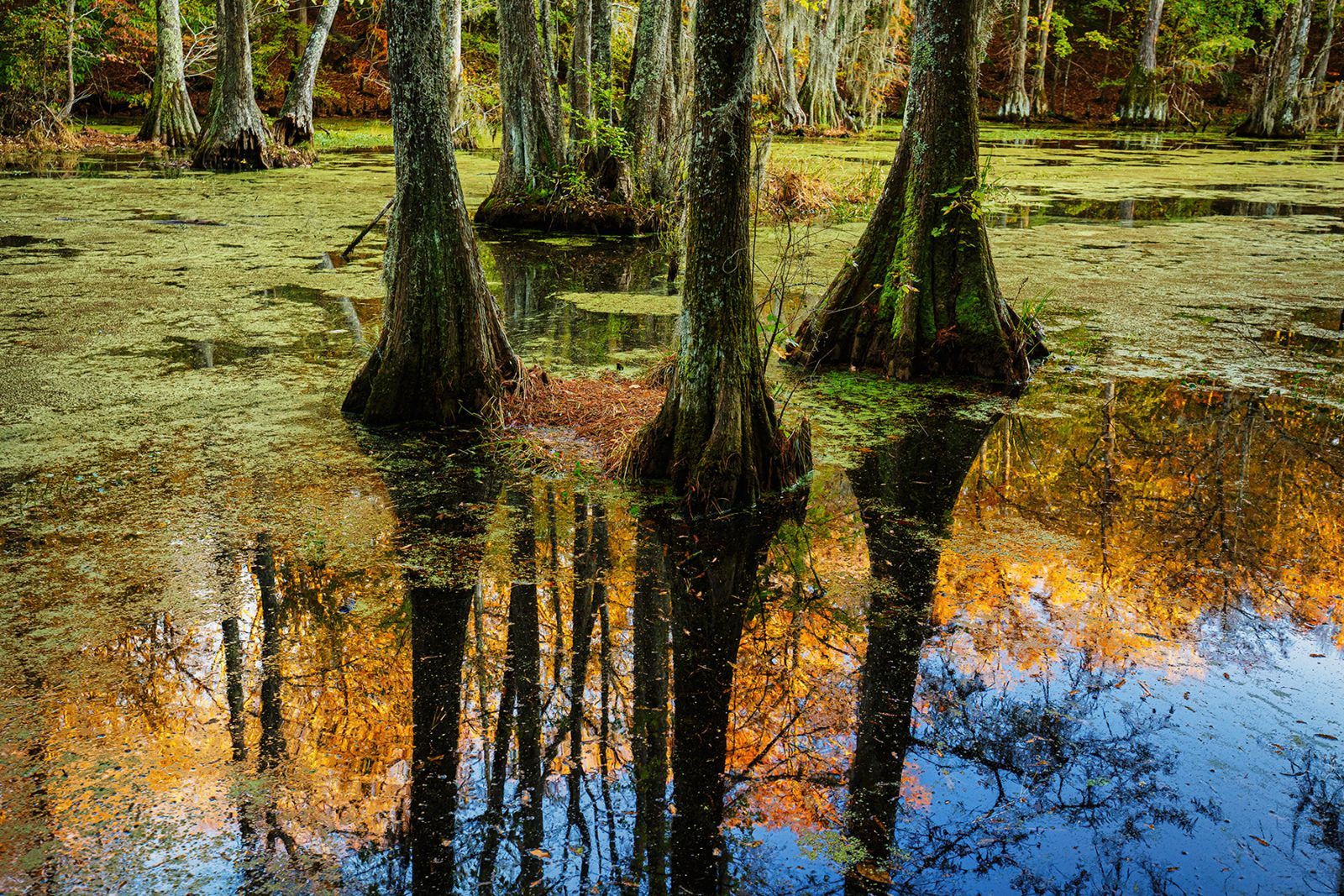 Autumn Greeting the Morning Between Mosses