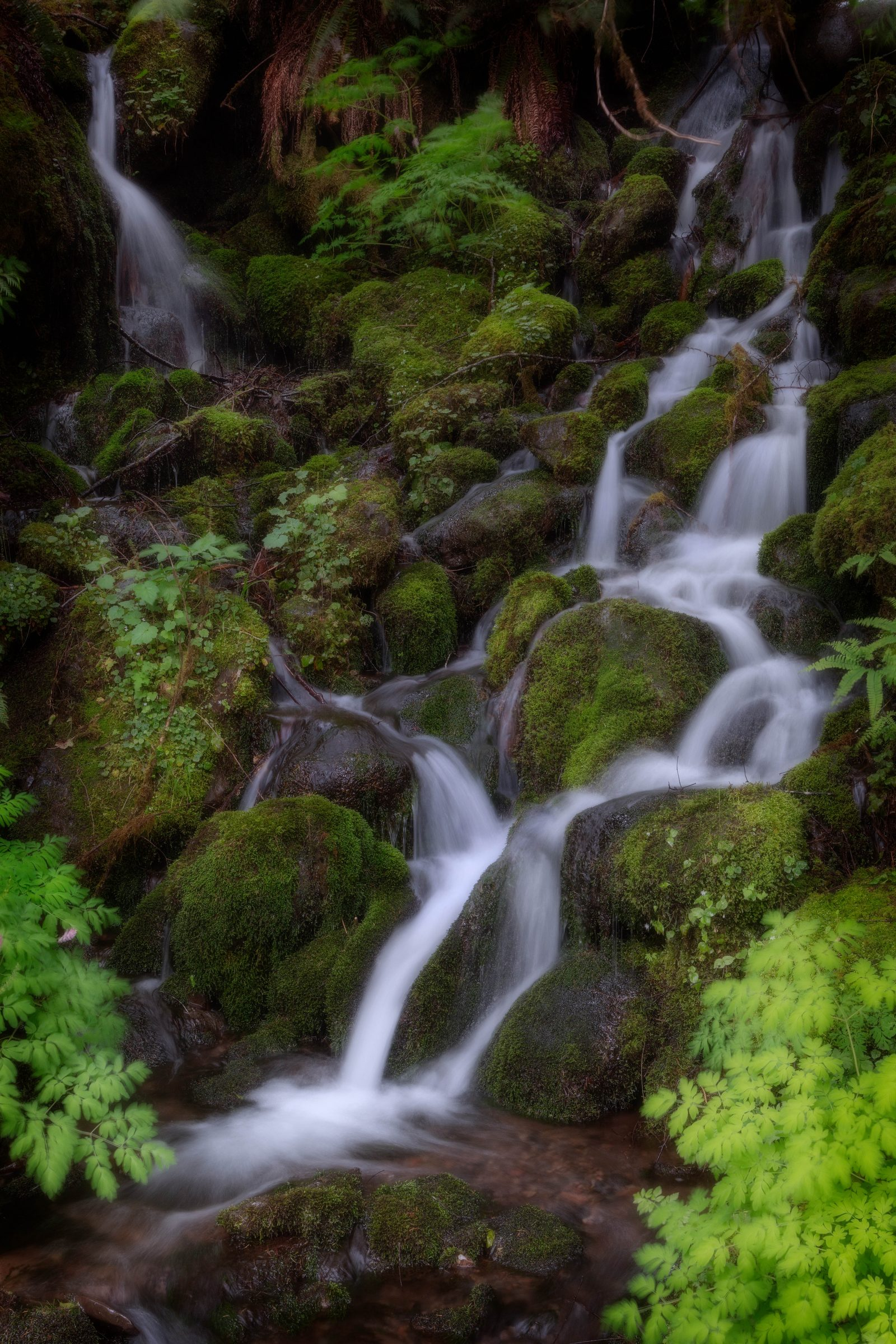 Waterfall in the Quinault Lake area