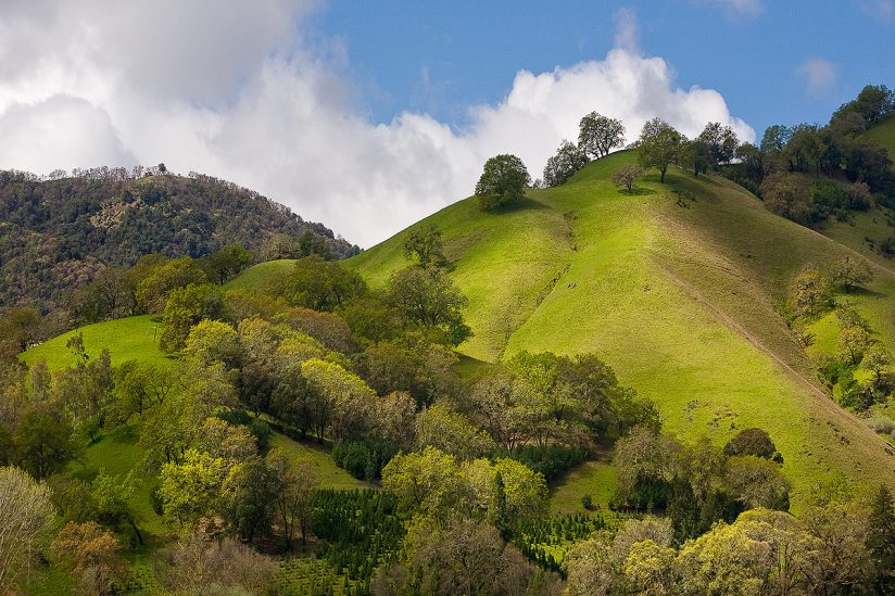 Russian River Valley Foothills