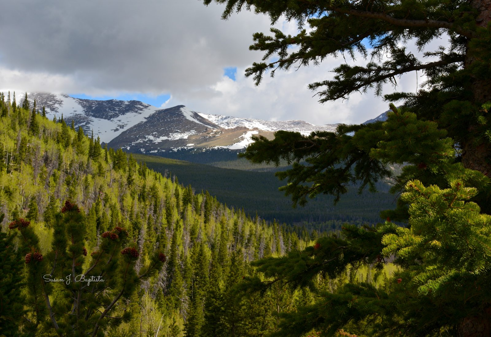 Early Summer In Rocky Mountain National Park