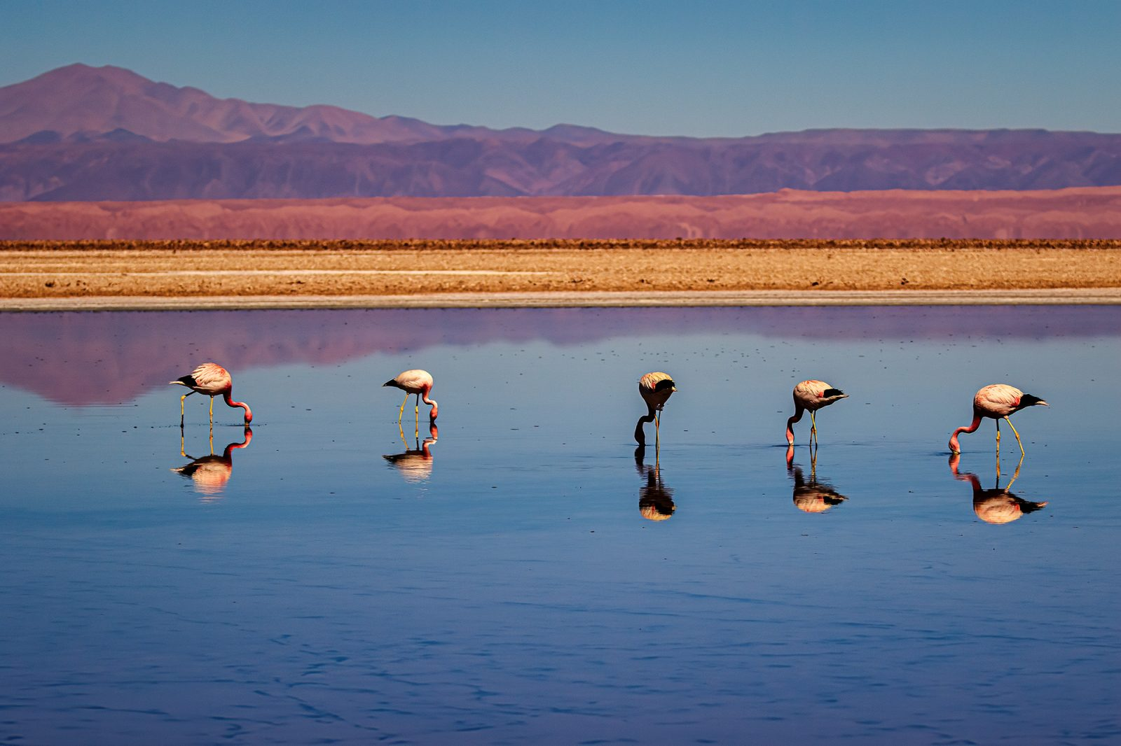 Andean landscape and flamingos