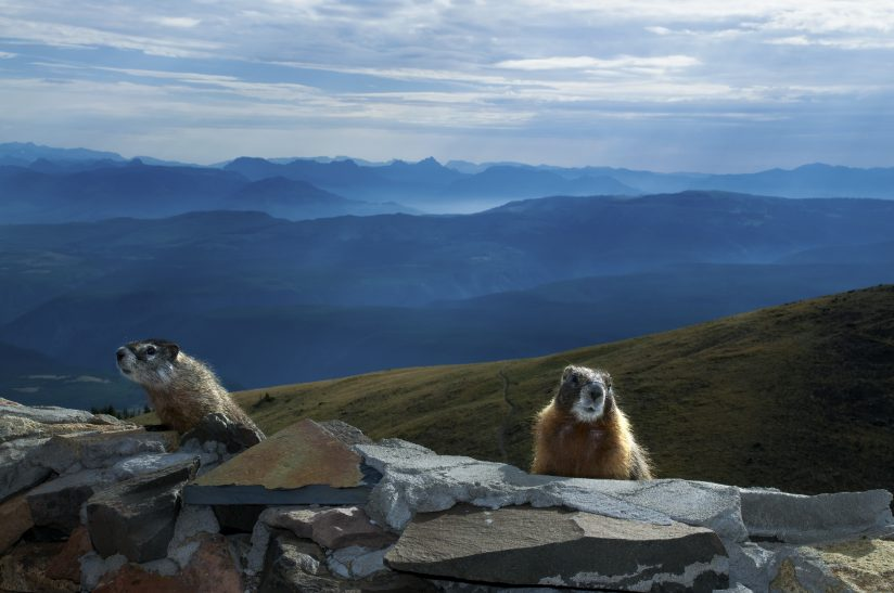 Home of the Marmots