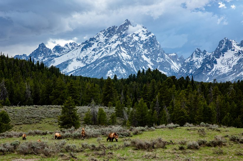 Guardians of the Tetons