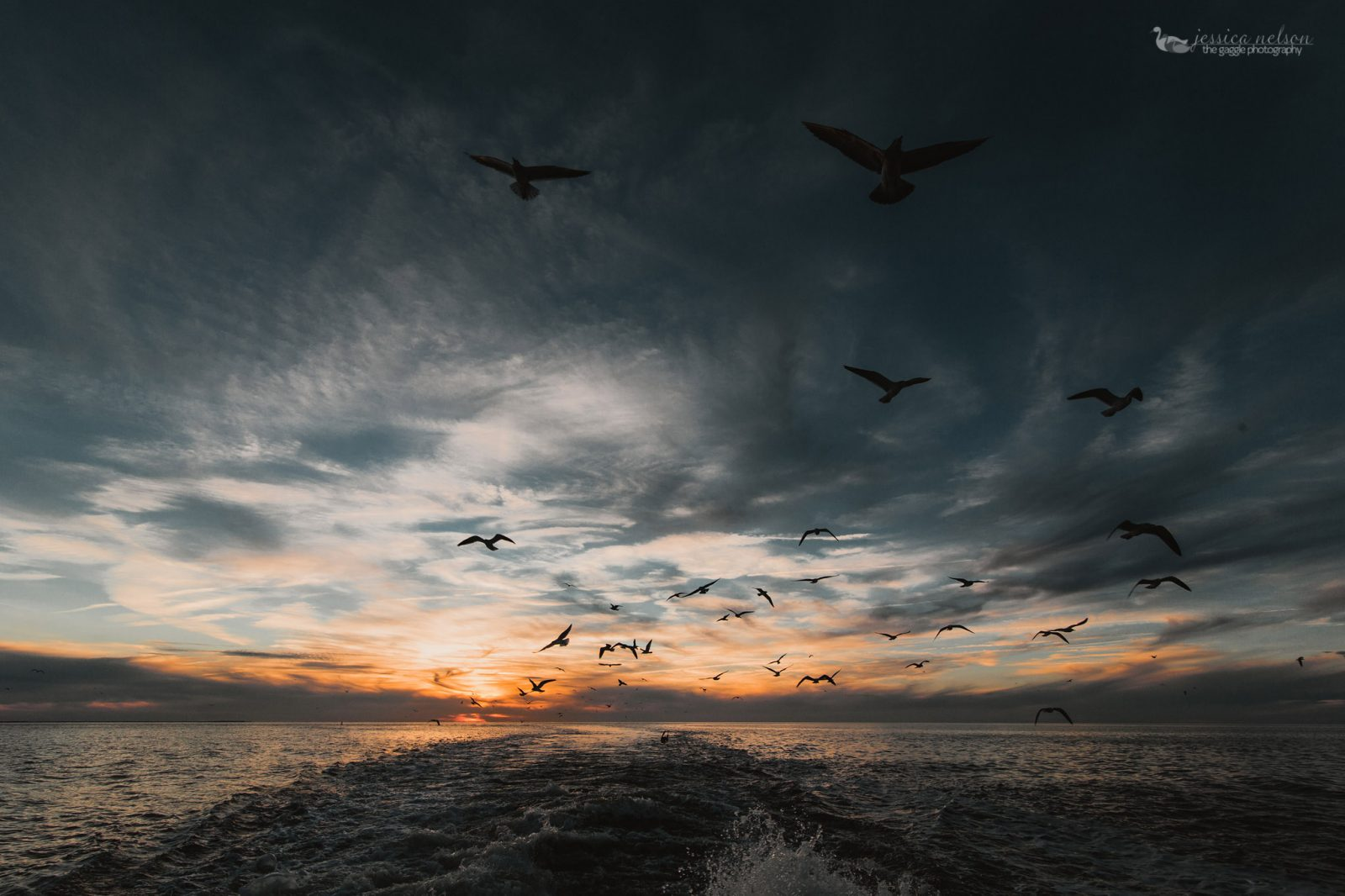 Gulls and Ferry