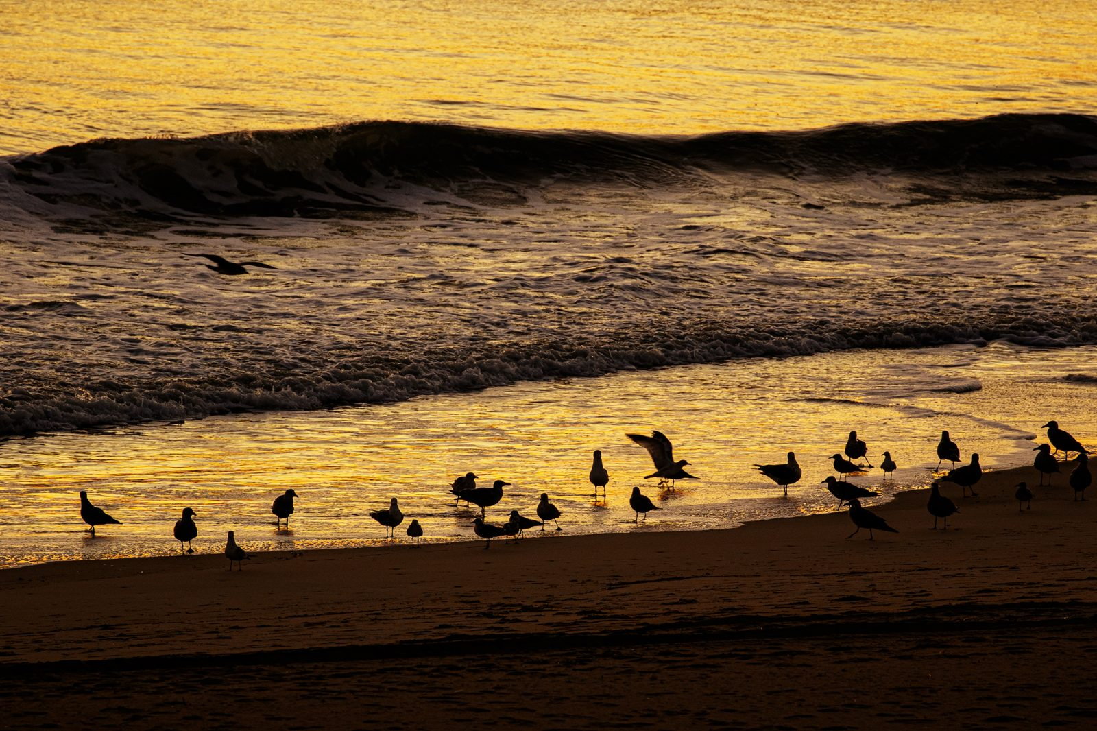 a flock of seagulls at sunrise time