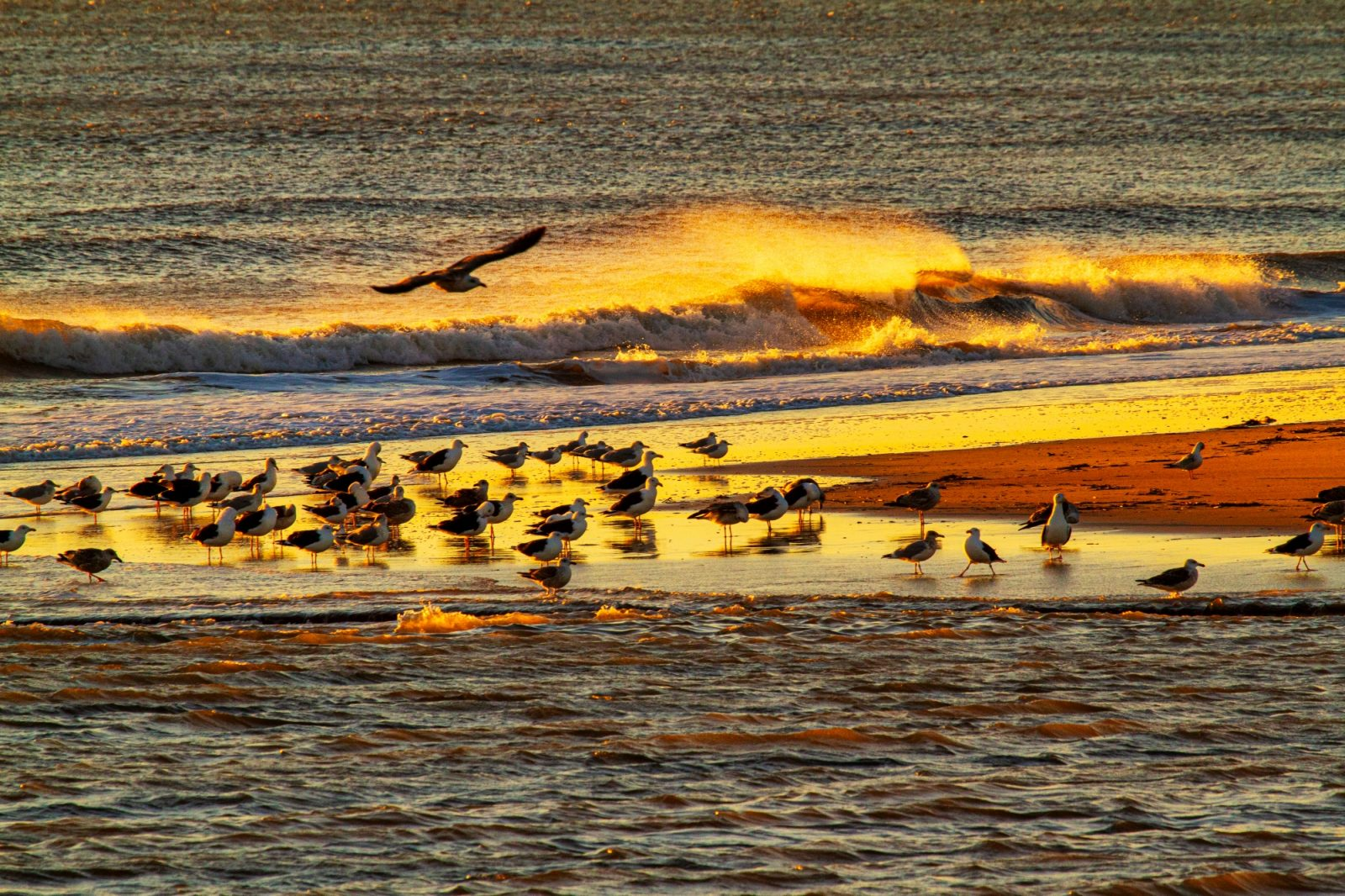 Waves dancing in the sunrise