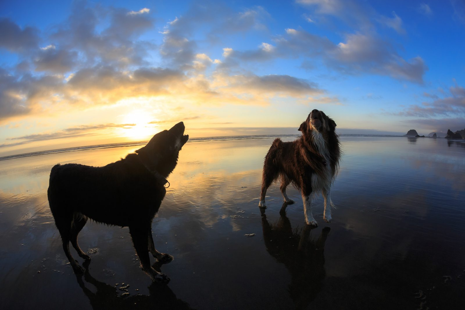 Howl If You Love The Beach