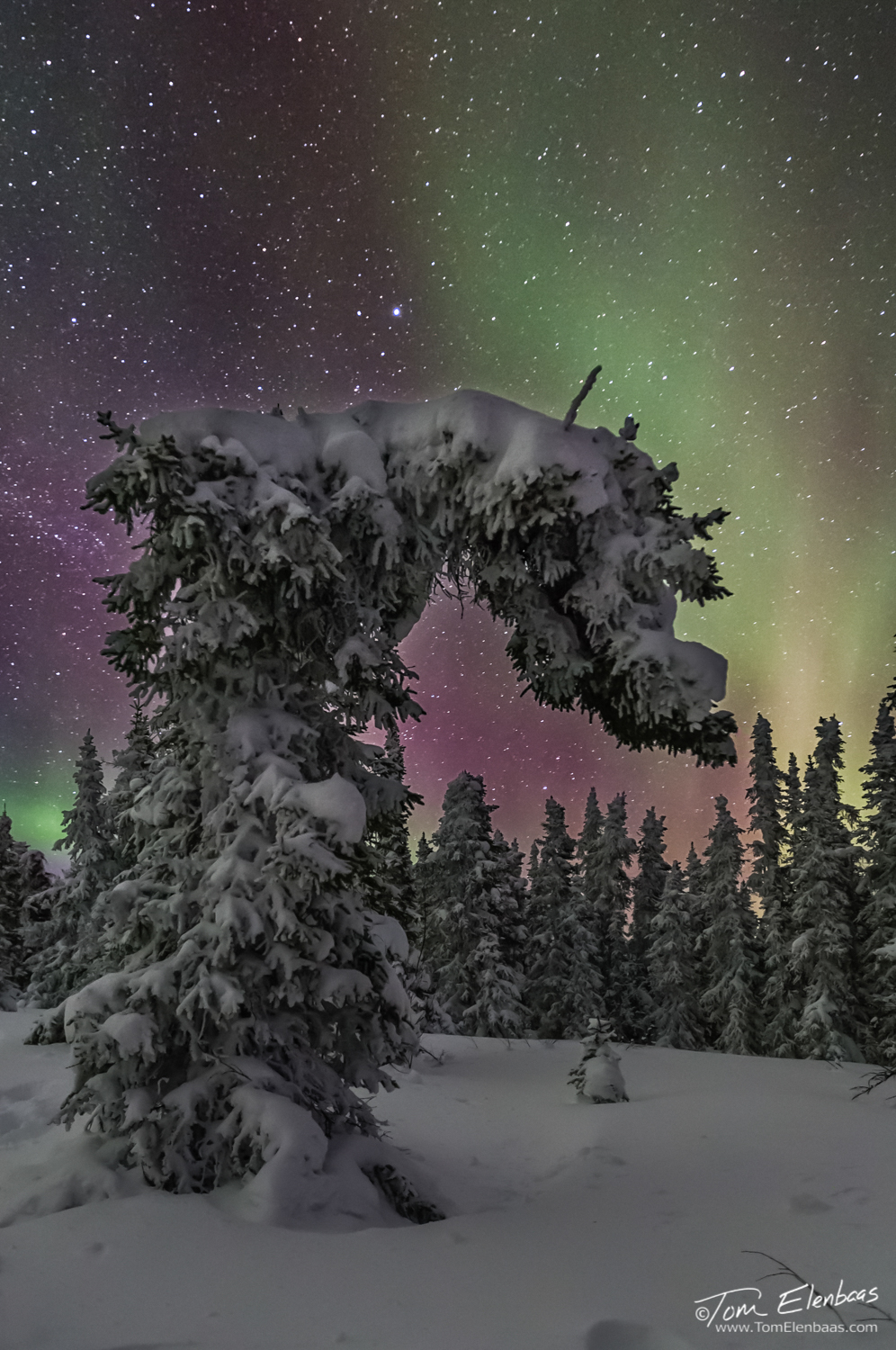 Bowing to the Goddess Aurora