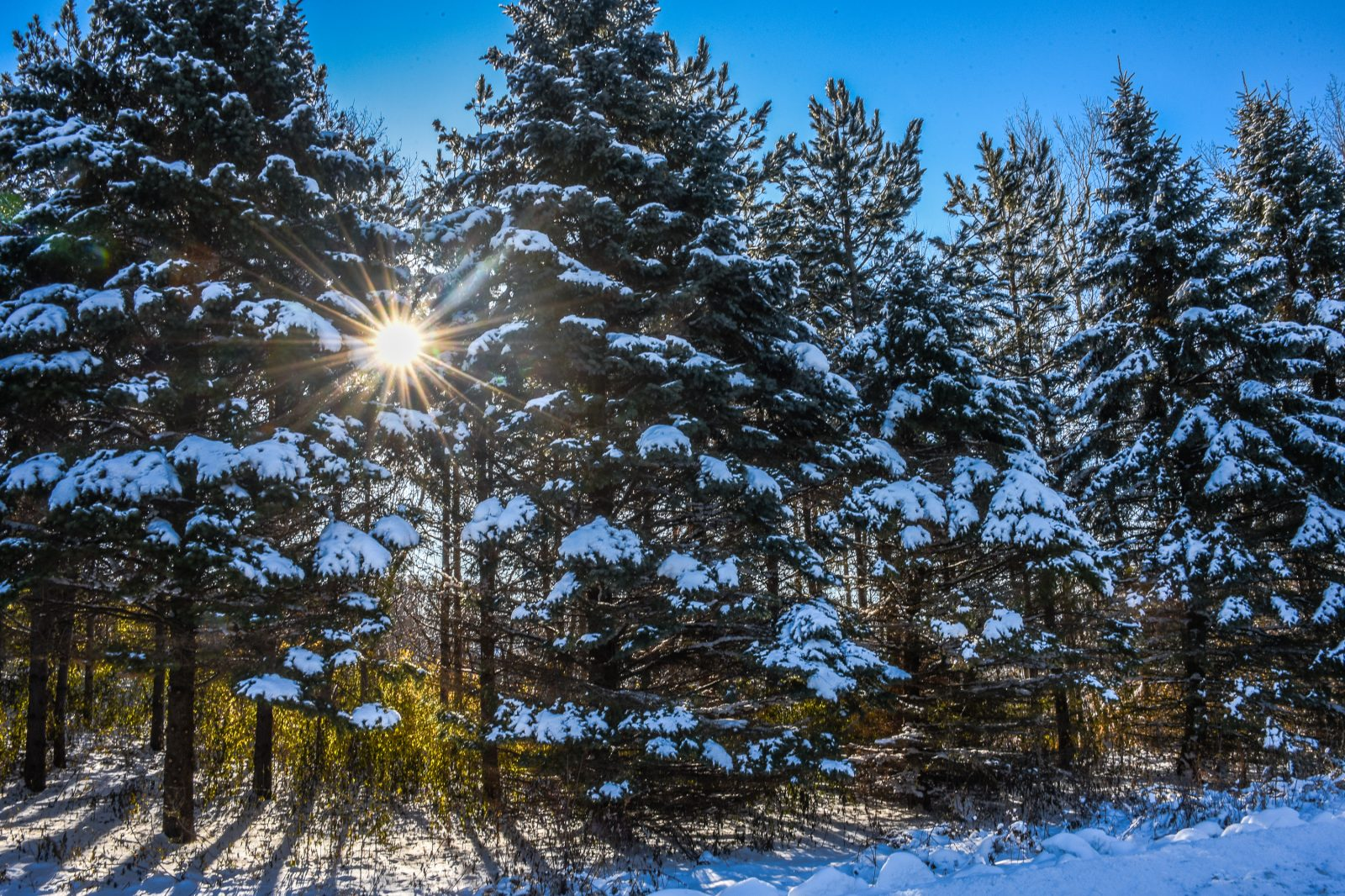 Sunlight Through the Snow Covered Trees