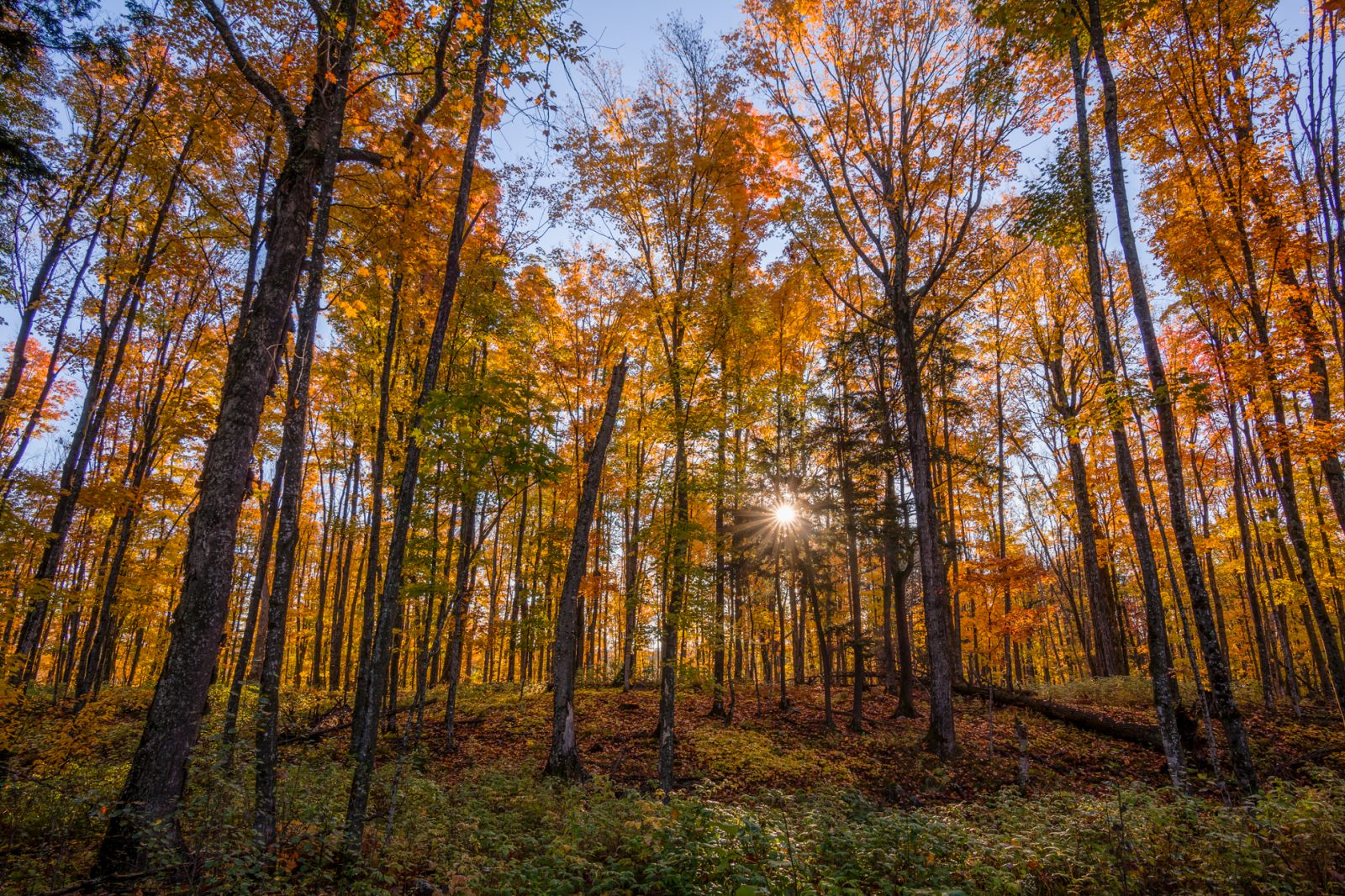 Autumn Color in the Northwoods
