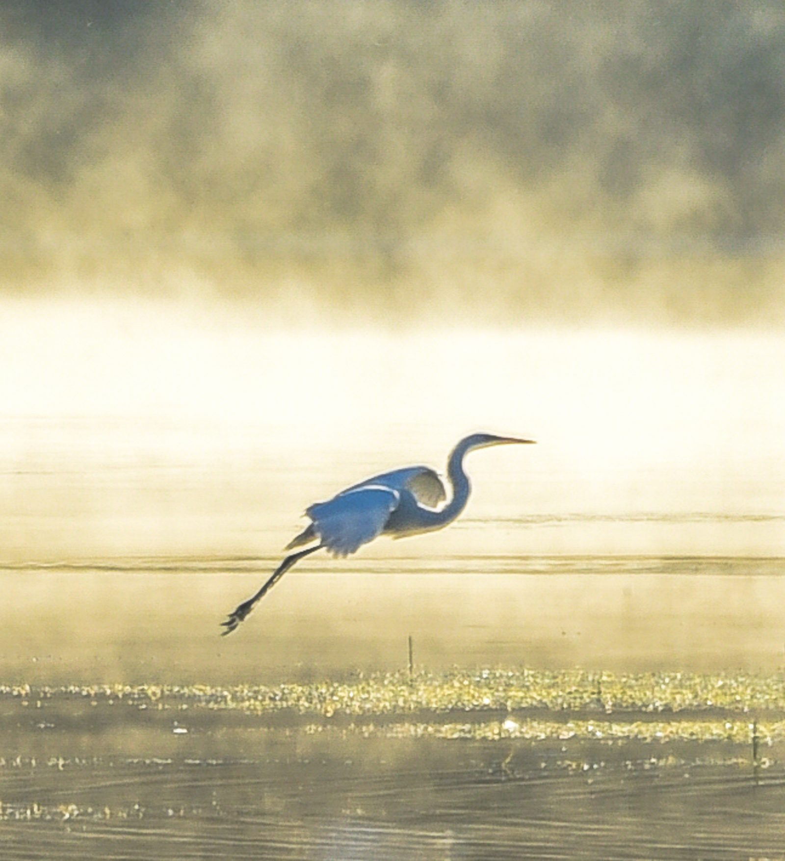 Flight Out of the Fog