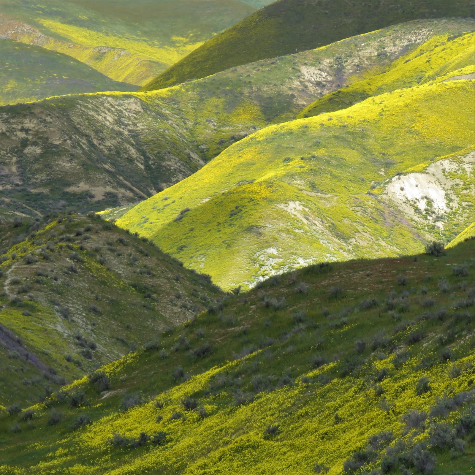 Flowers and Shadows in the Temblor Range