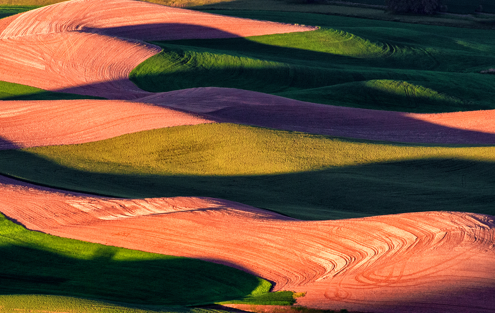 light and shadow of wheat field