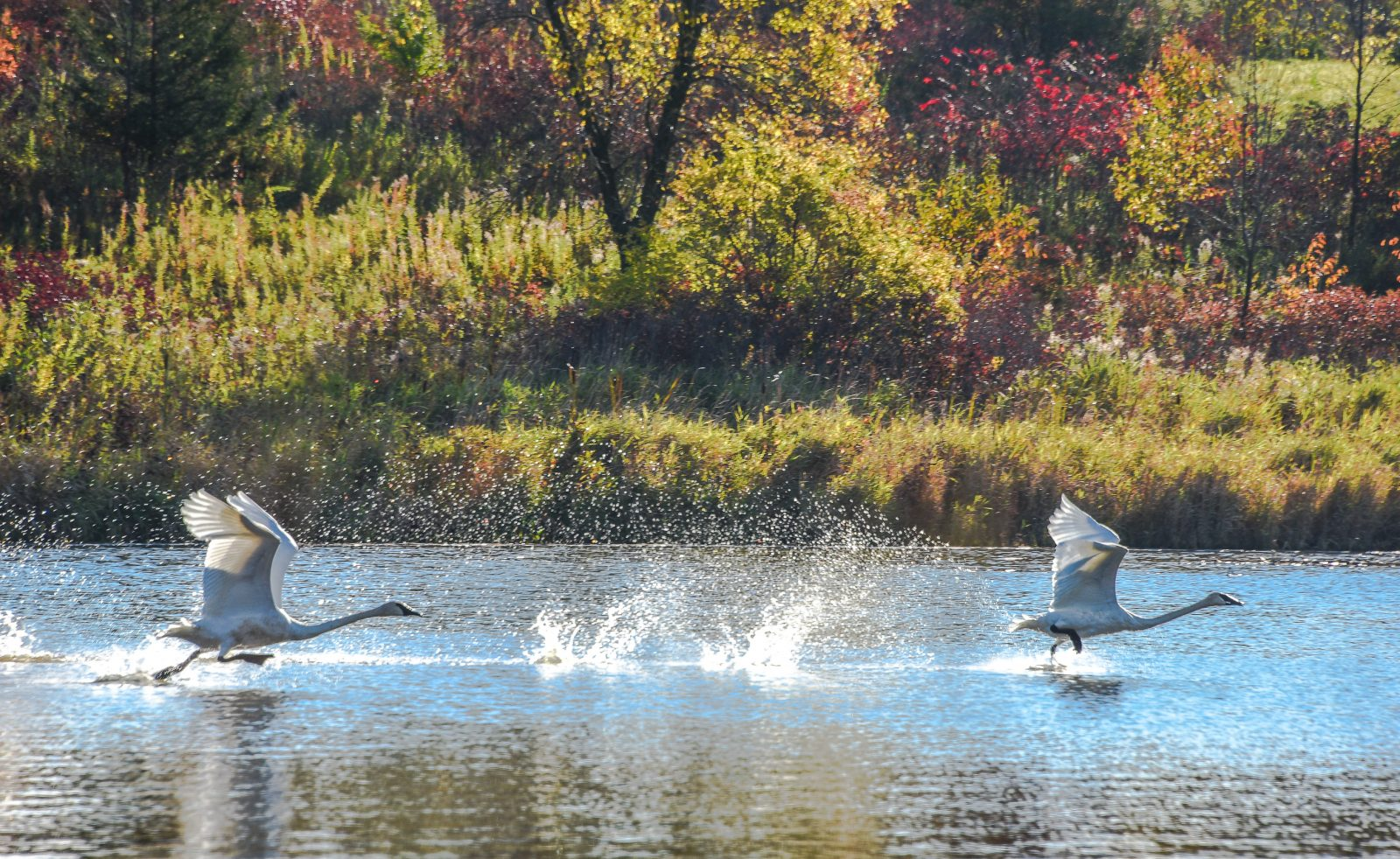 Taking Off Over the Pond