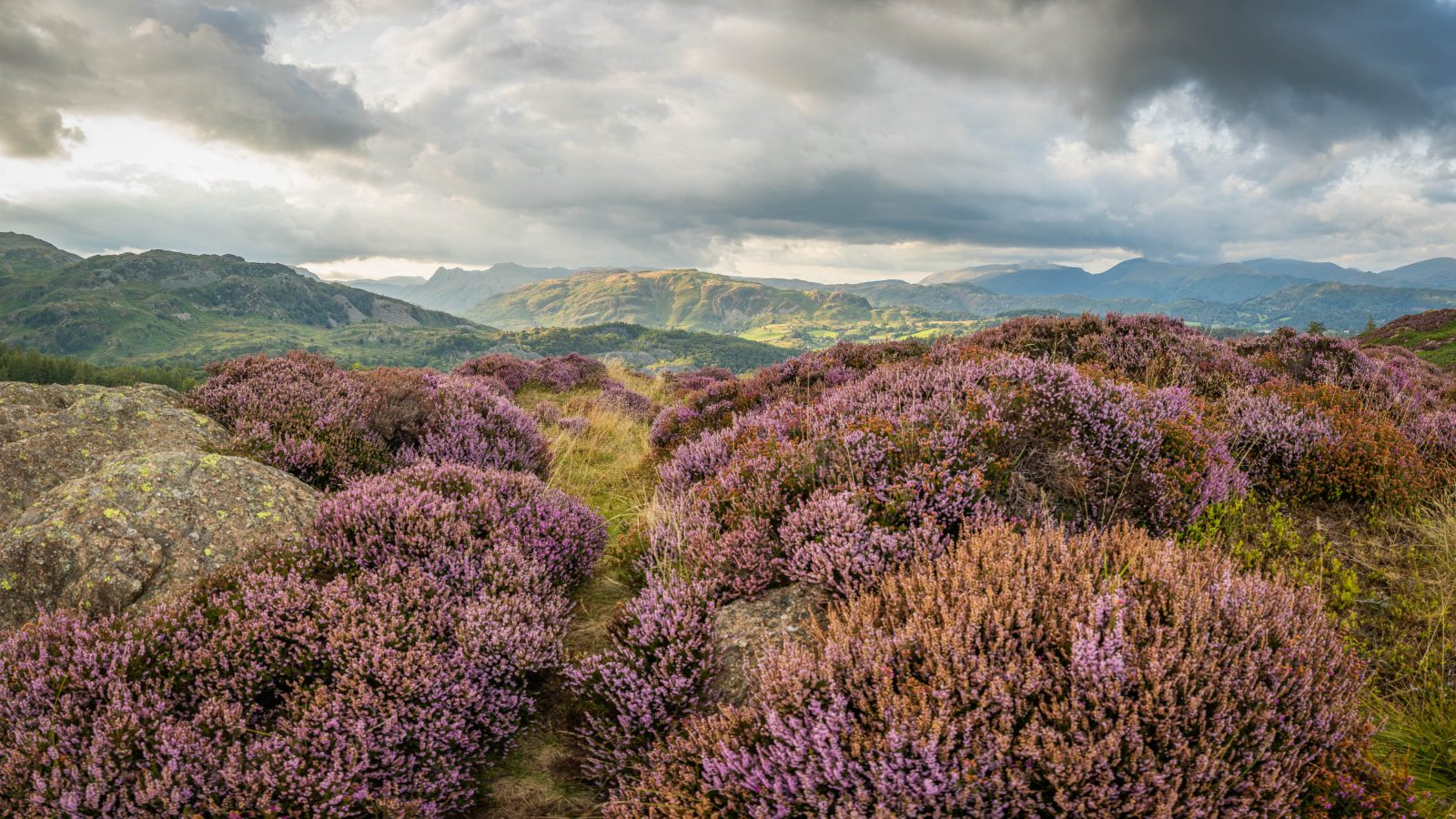 View from Holme Fell