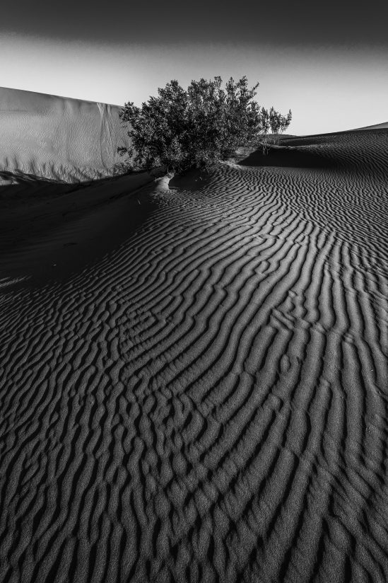 Bush and Side-lit Intersecting Sand Patterns